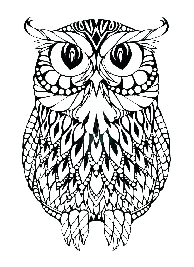 736x1013 Printable Owl Coloring Pages Adults Color Pages Free Printable