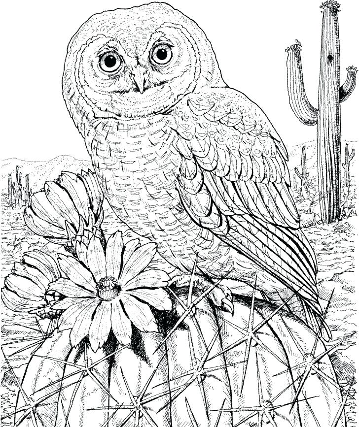 728x867 Printable Owl Coloring Pages For Adults As Well As Adult Coloring
