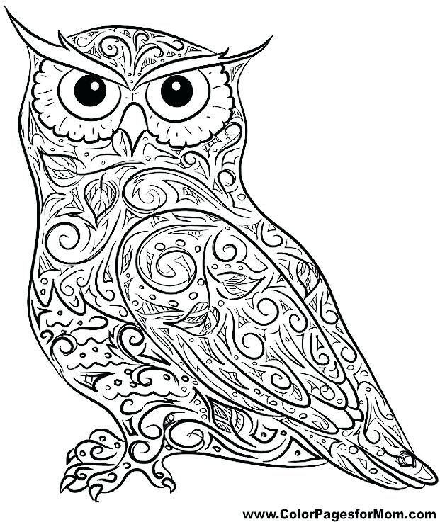 621x737 Cute Owl Coloring Pages For Adults To Print In Kids With Best