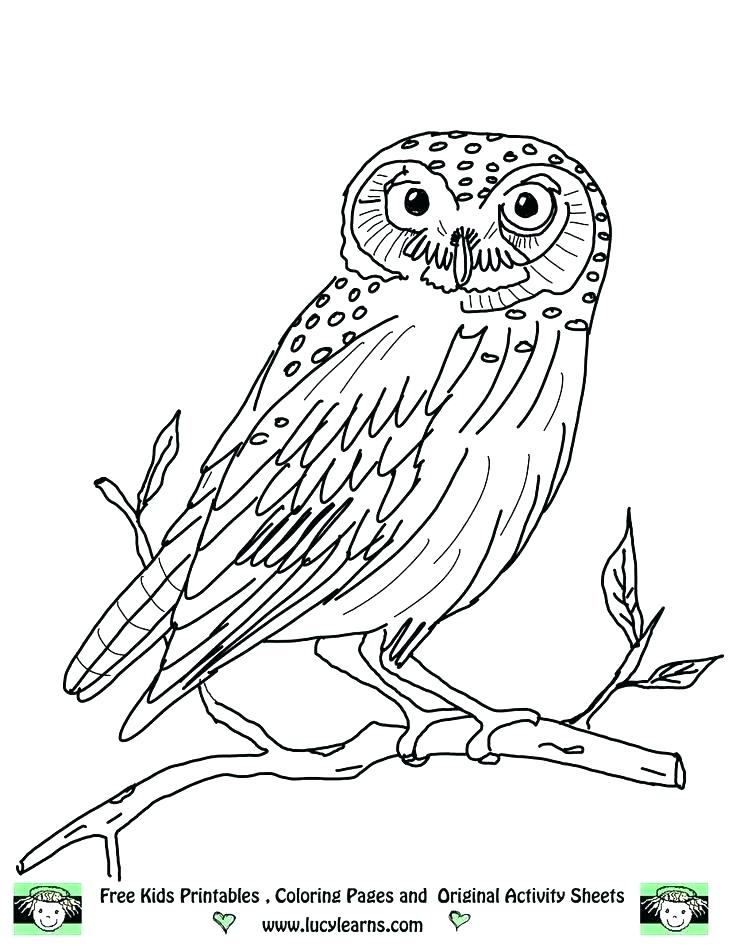 736x952 Baby Owl Coloring Or Owl Print Out Coloring Pages Owl Coloring