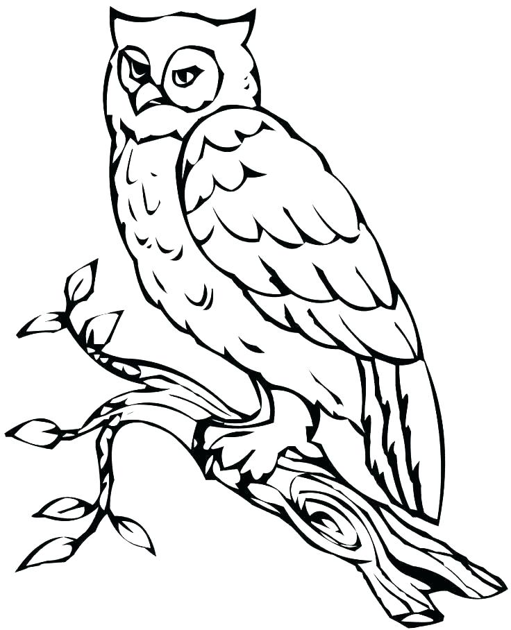 736x908 Printable Owl Coloring Pages Icontent
