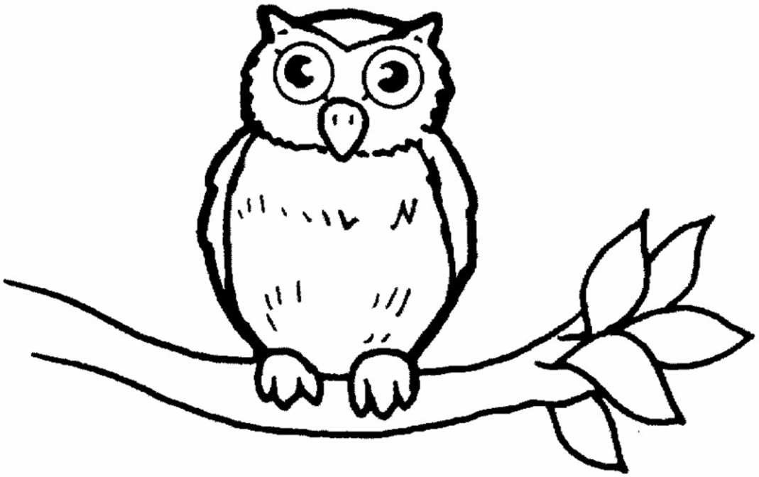 1069x672 Kids Owl Pictures