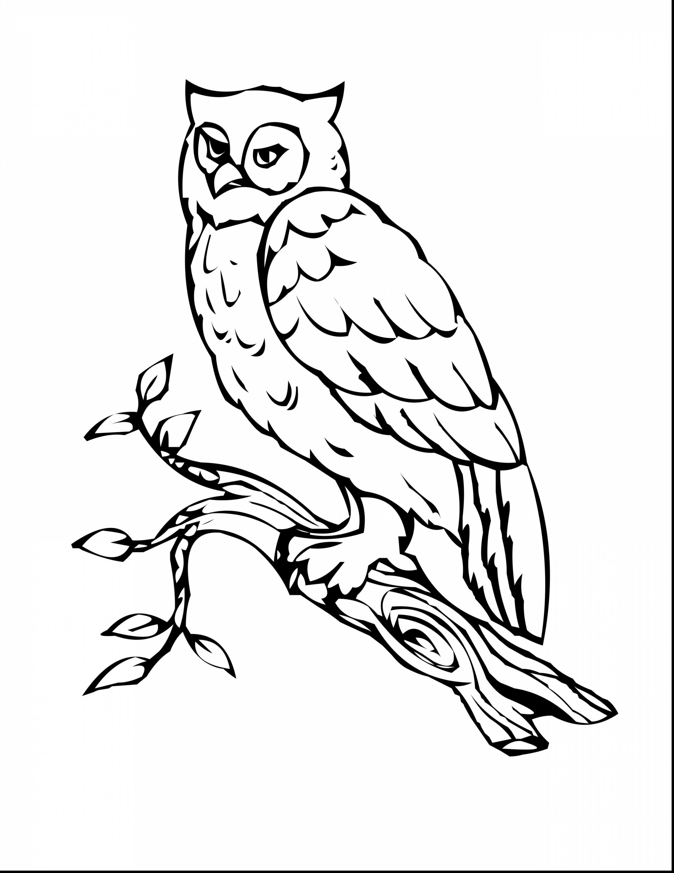 2805x3630 Immediately Owl Coloring Pages For Adults Awes