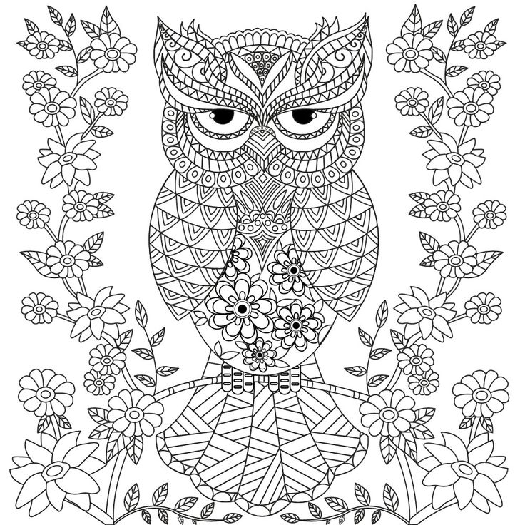 736x736 Owl Coloring Pages For Adults Free Detailed Owl Coloring Pages