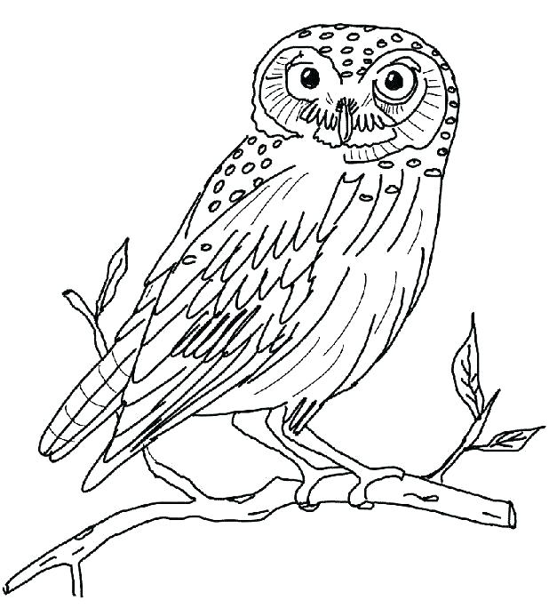 618x684 Owl Coloring Pages Printable Snowy Owl Coloring Pages Snowy Owl