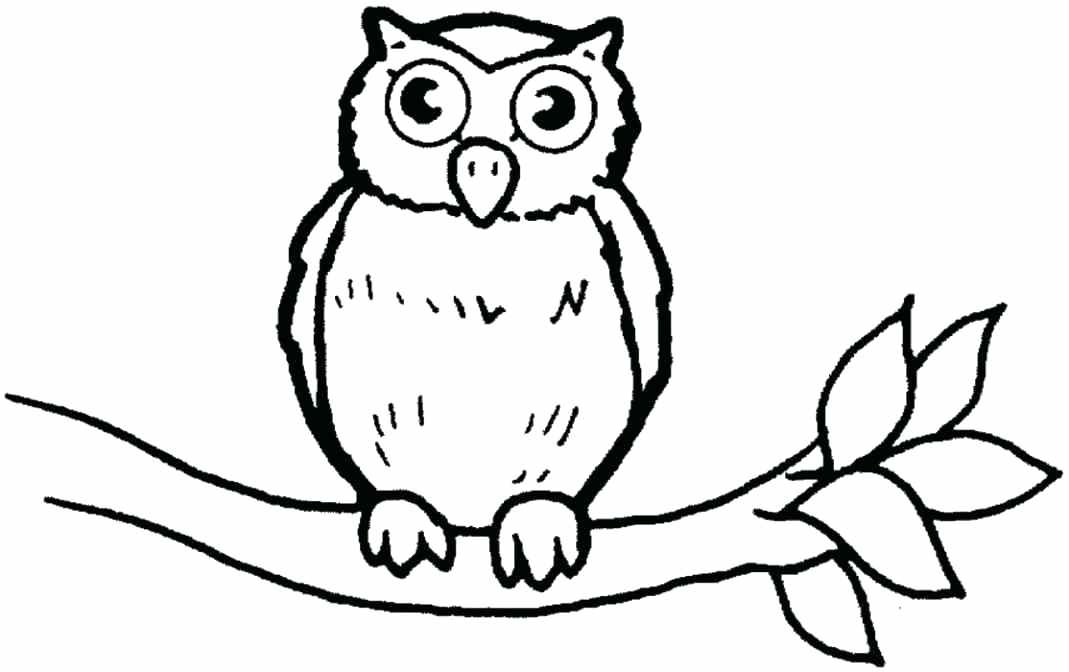 1069x672 Barn Owl Coloring Page Baby Owl Coloring Pages Baby Owl Coloring