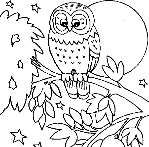 600x591 Cute Owl Is Dreamy Coloring Pages