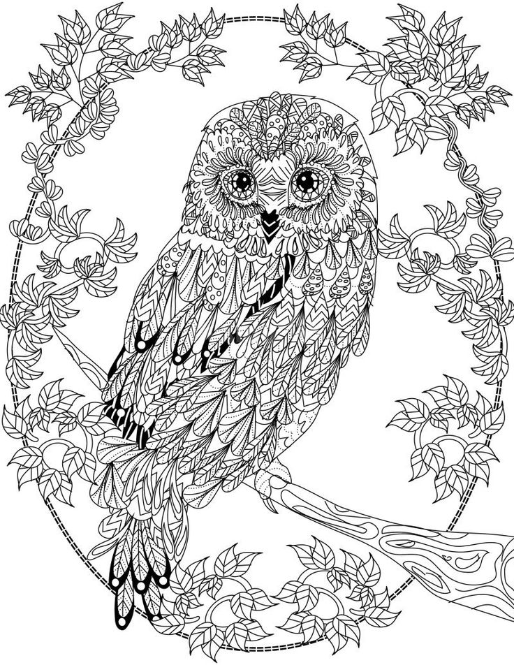 736x952 Owl Coloring Pages For Adults Printable In Pretty Paint Epic