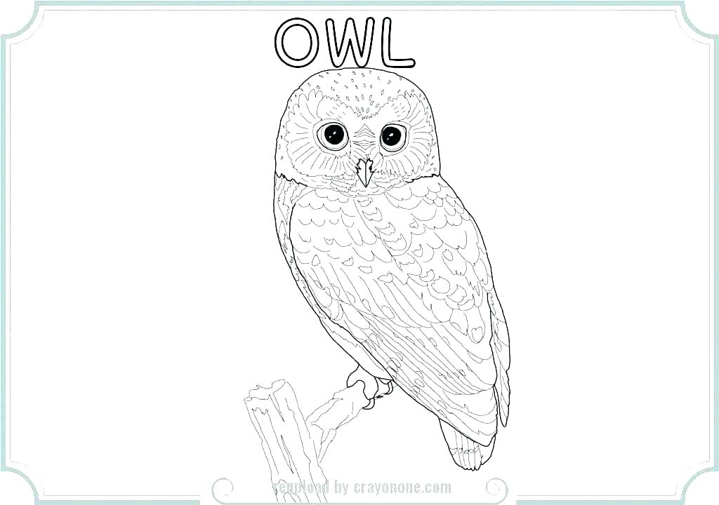 1024x720 Owl Coloring Pages For Kids Medium Size Of Printable Owl Coloring