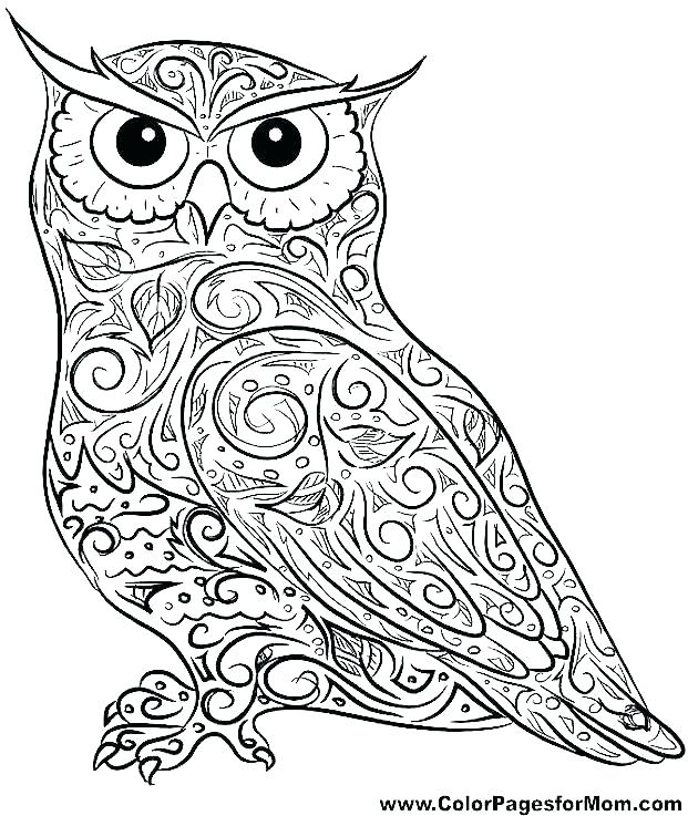 621x737 Owl Print Out Coloring Pages Owl Colouring Pages Owl Printable
