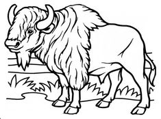 235x174 Musk Ox Mother And Baby Coloring Page Alaska Education