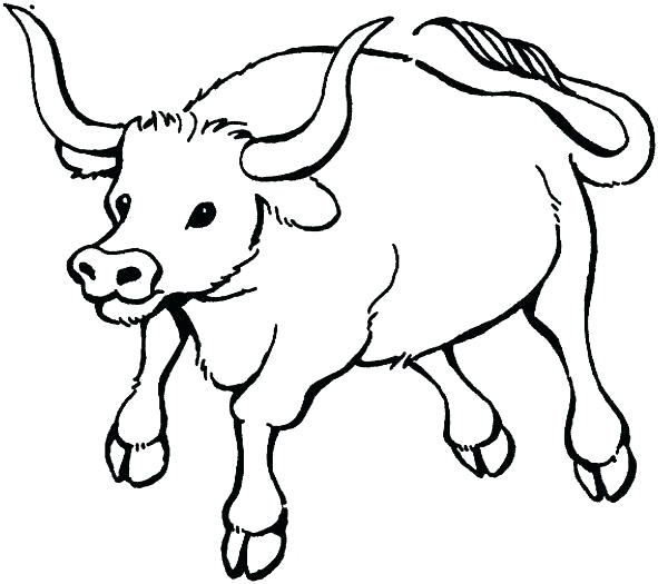 591x525 Ox Coloring Page Dazzling Design Ox Coloring Pages Musk Costa