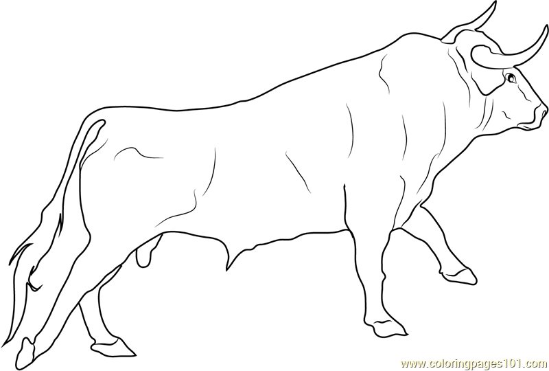 800x540 Spanish Fighting Bull Coloring Page