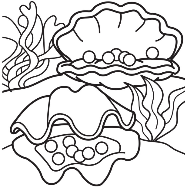 617x618 Pearl Oysters Coloring Page Coloring Book