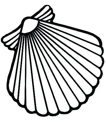 370x478 Seashell Coloring Page Sea Shells Coloring Pages Scallop Shell Net