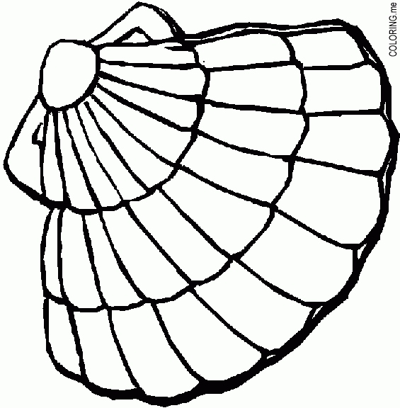 565x576 Shell Coloring Pages Unique Oyster Shell Coloring Page Coloring