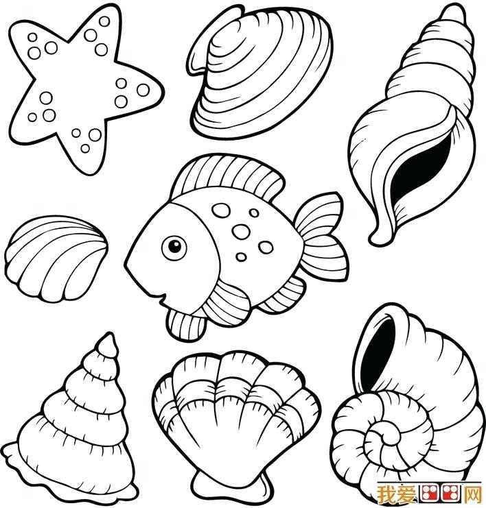 708x741 Shell Coloring Pages Beach Shell Coloring Pages