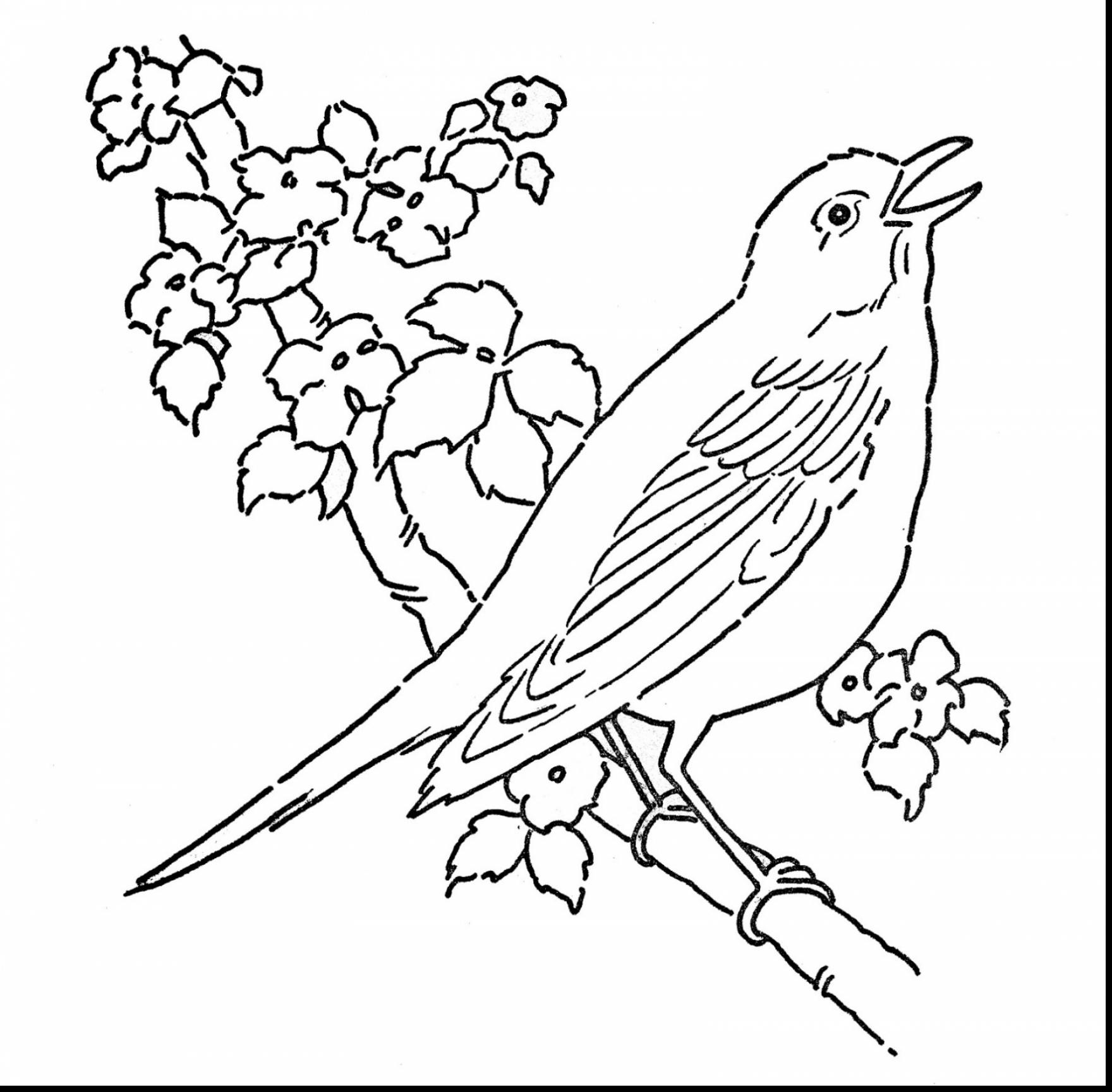 1760x1728 Red Bird Coloring Page