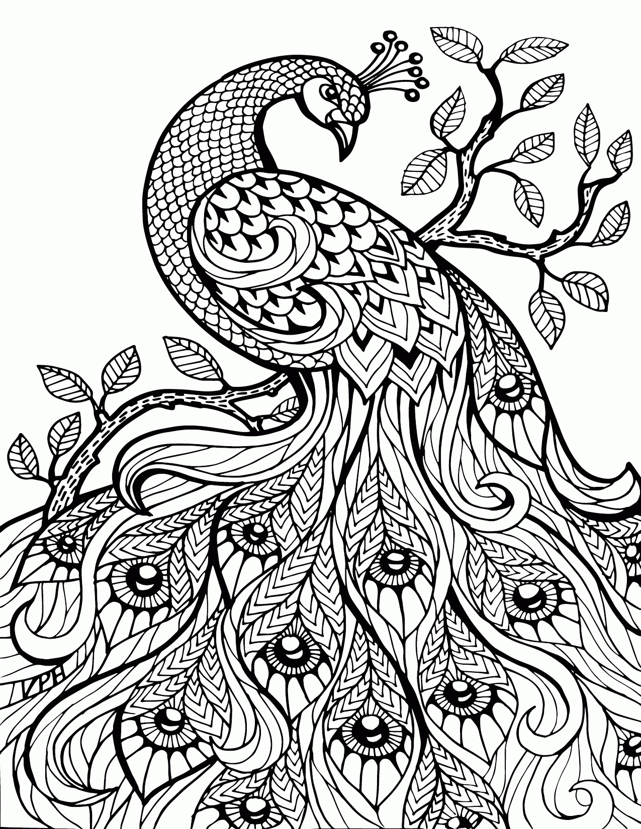 photograph relating to Printable Adult Coloring Pages Paisley known as Paisley Coloring Webpages Pdf at  Free of charge for