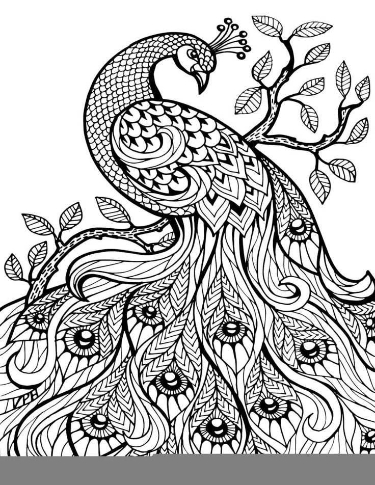 Paisley Peacock Coloring Pages