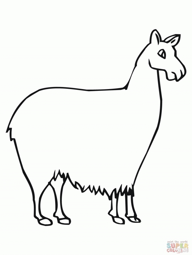 640x853 Llama Coloring Page Pictures Free Coloring Pages