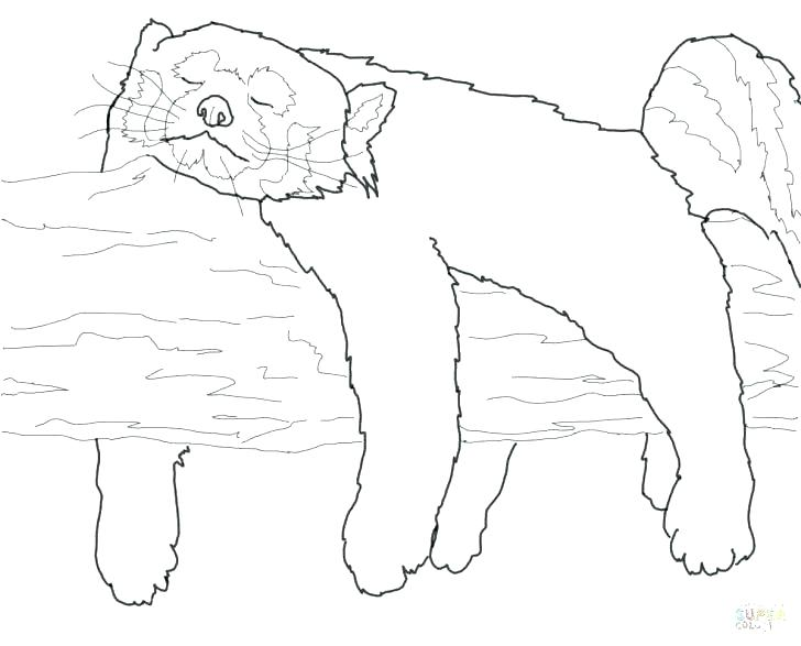 728x587 Outline Of A Panda Pajama Coloring Sheets Red Panda Coloring Pages