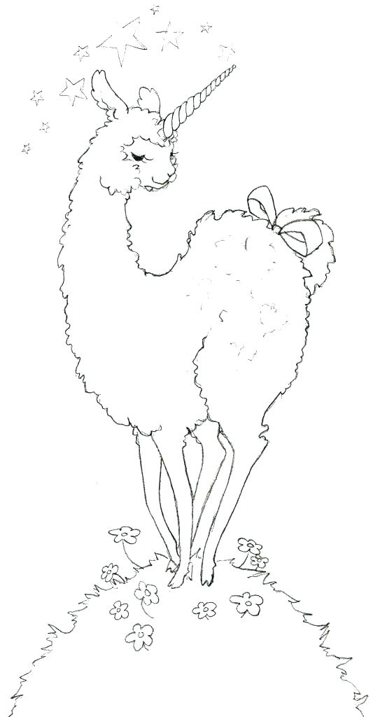 533x1024 Alpaca Coloring Pages How To Draw An Alpaca Plus Adult Llama Red