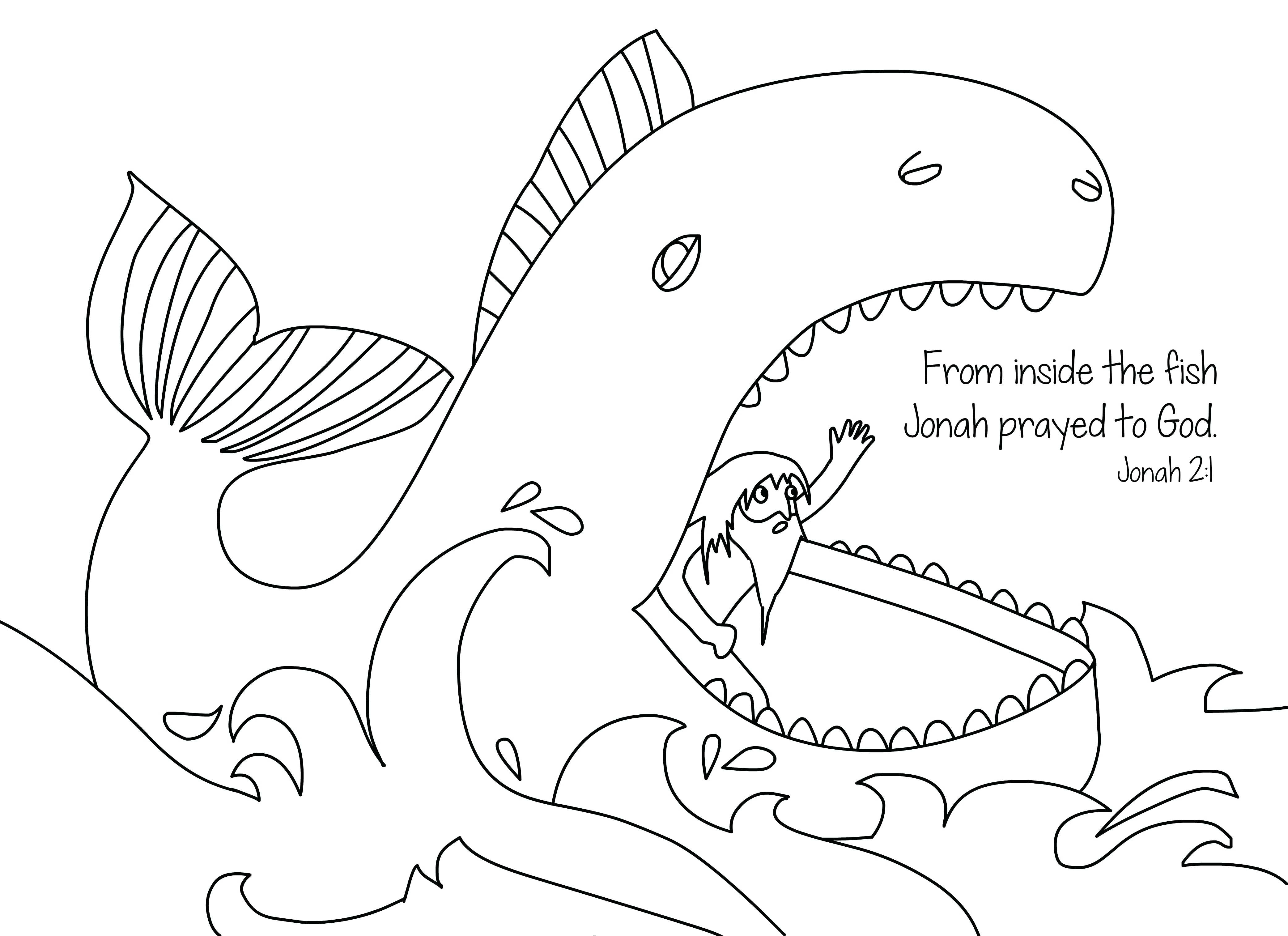 4167x3028 Coloring Pages Online Whale Spirit Animal Totems And Messages