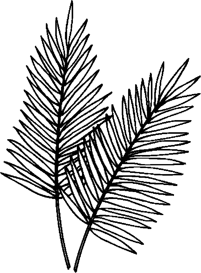 662x900 Palm Leaves Coloring Page
