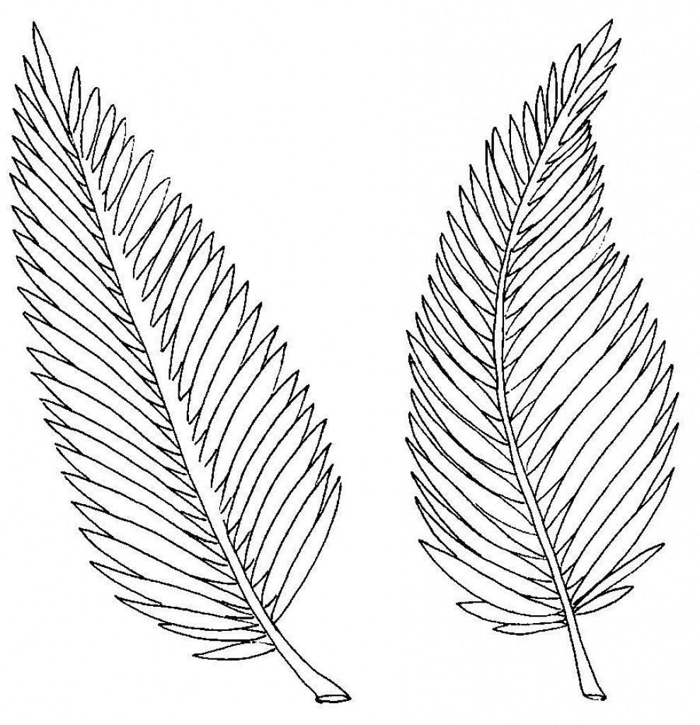 989x1024 Palm Tree Branch Coloring Page Leaf Pages
