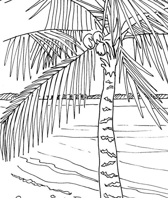 570x674 Palm Tree Coloring Page Embroidery Pattern Pdf Download
