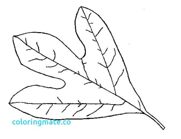 600x462 Printable Leaves Coloring Pages Leaf Coloring Pages Printable Palm