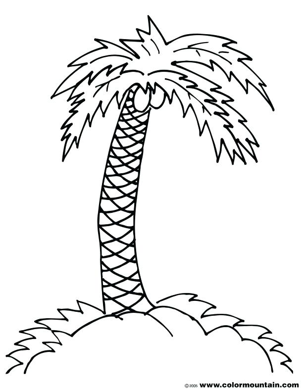 618x788 Excellent Extraordinary Tree Branch Coloring Page Fee Kids