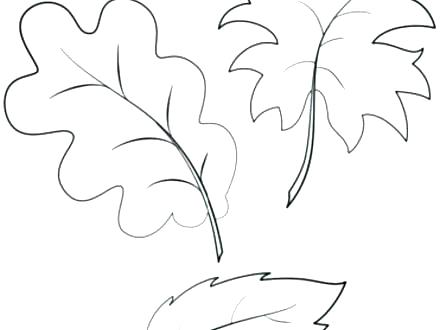 440x330 Leaf Coloring Page Leaf Templates Printable Palm Leaf Coloring
