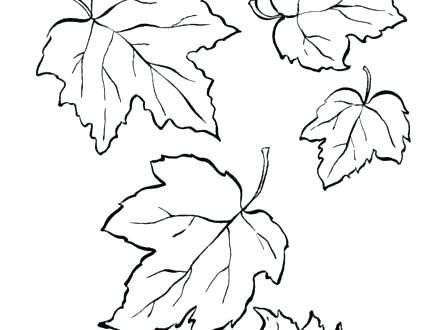 440x330 Leaf Coloring Pictures Leaves Coloring Pages Printable Free