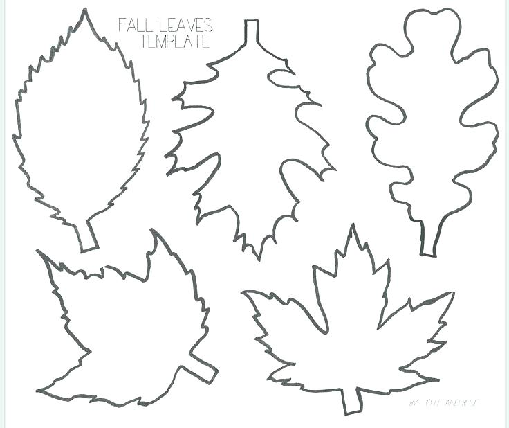 736x618 Leaf Printable Coloring Pages Leaves Fall Leaves And Craft