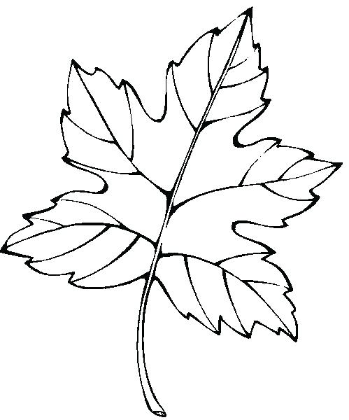 499x600 Palm Leaves Coloring Pages Palm Leaf Coloring Sheets