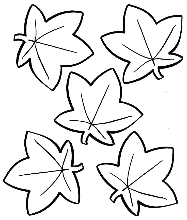 736x868 Leaf Coloring Pages Free Printable For Kids As Well As Fall Leaves
