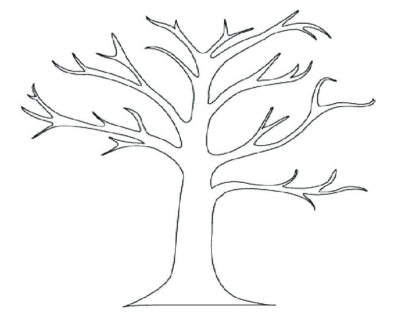 800x654 Palm Tree Coloring Page Branch Coloring Pages Coloring Page