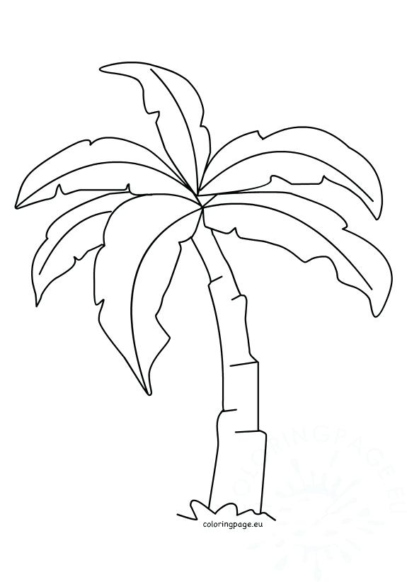 575x822 Palm Tree Coloring Page Coloring Palm Tree Leaves Coloring Pages