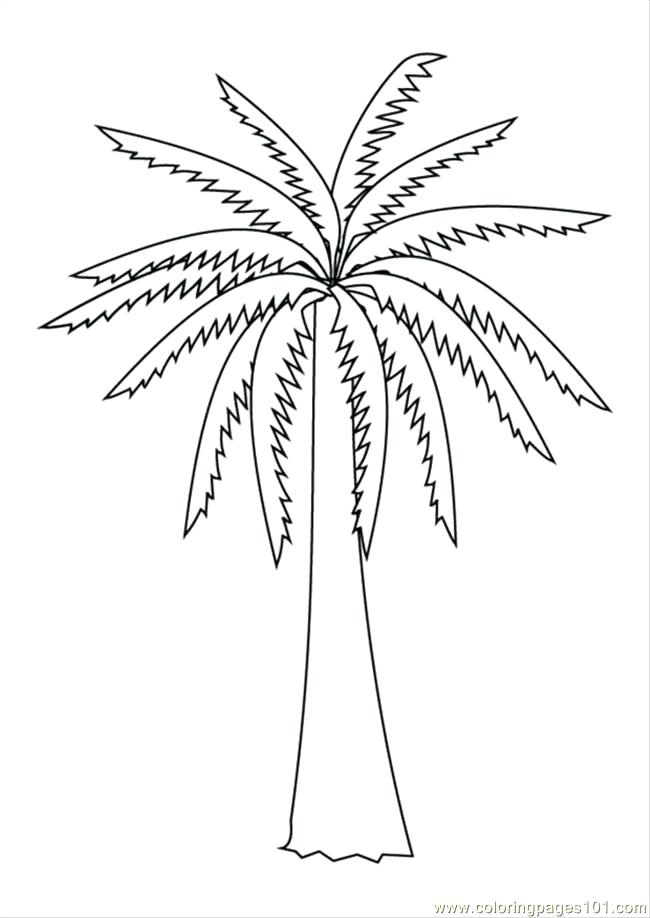 650x918 Coloring Pages Of Trees Coloring Pages S Pages Photo Palm Tree