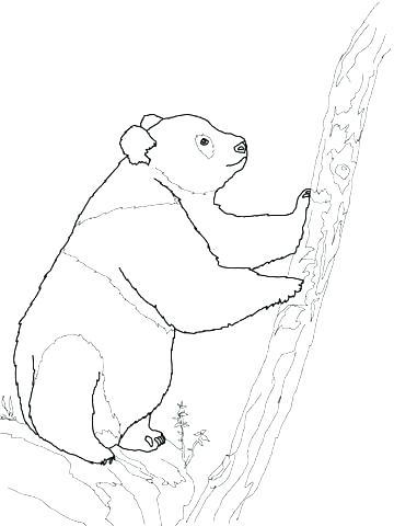 360x480 Bear Coloring Pages Cute Panda Coloring Pages Panda Bear Coloring