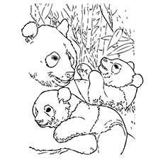 230x230 Panda Bear Coloring Pages Top Free Printable Cute Panda Bear