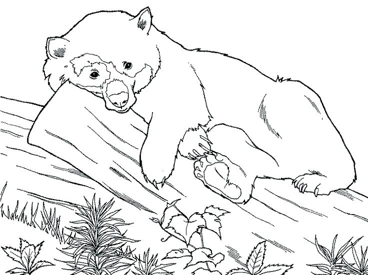 736x551 Bear Coloring Pages Printable Panda Bear Coloring Pages The Best