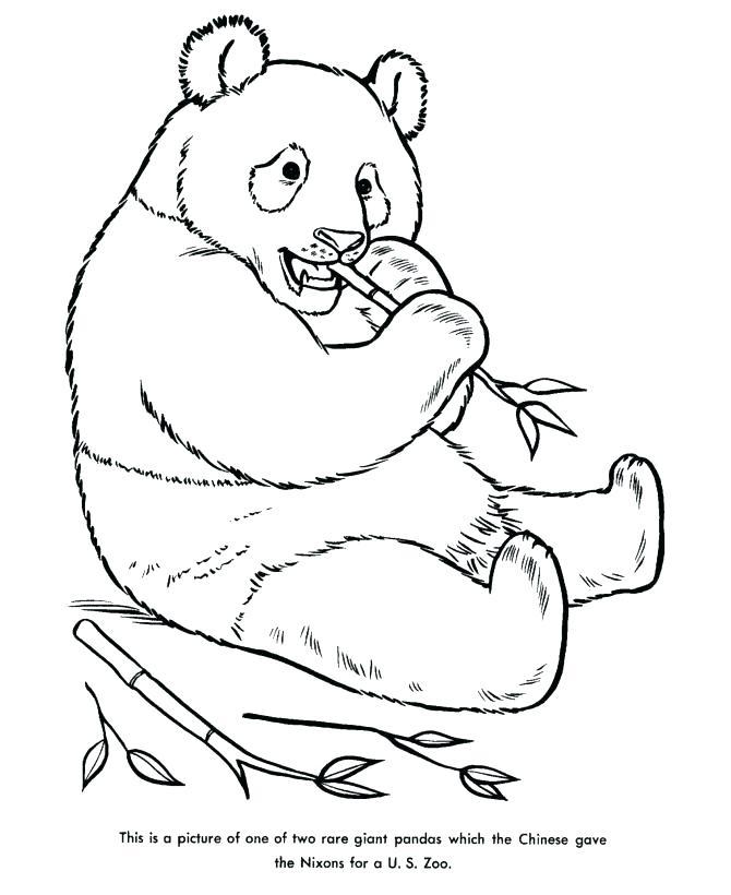 670x820 Panda Coloring Pages Giant Panda Coloring Page Giant Panda