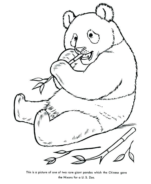 600x734 Giant Panda Coloring Page Coloring Pages Of Pandas Giant Panda