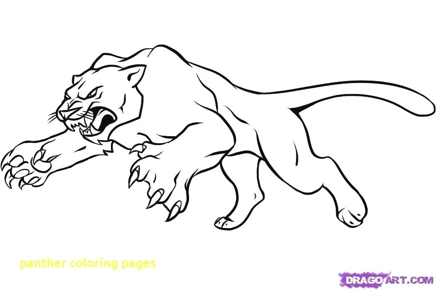 888x592 Panther Coloring Pages Panther Coloring Pages With Great Panther