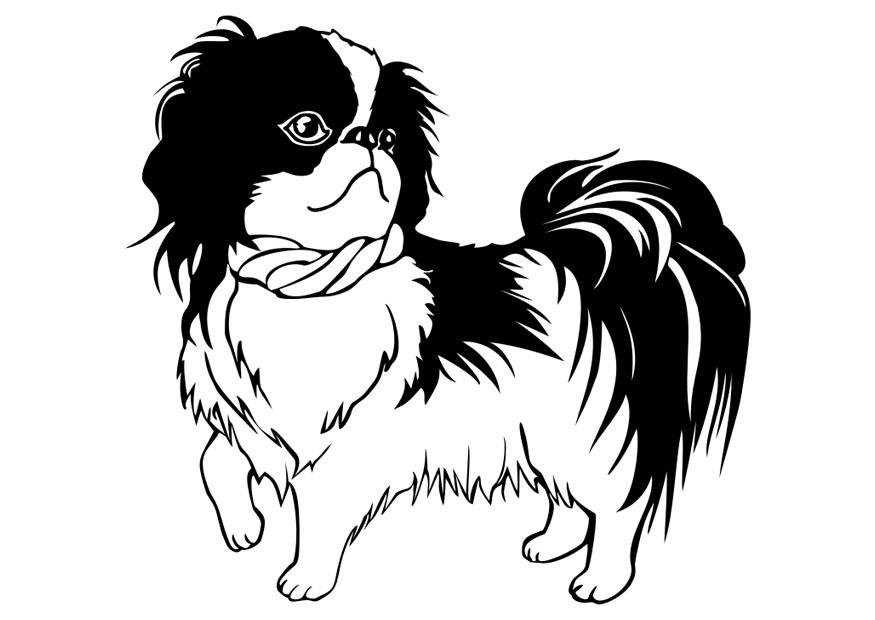 875x620 Coloring Page Dog