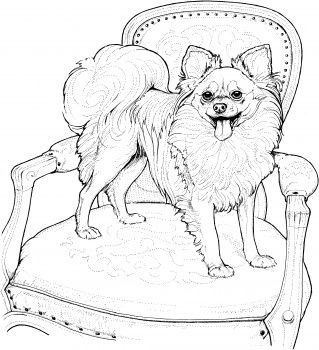 319x350 Best Dog Coloring Images On Coloring Books