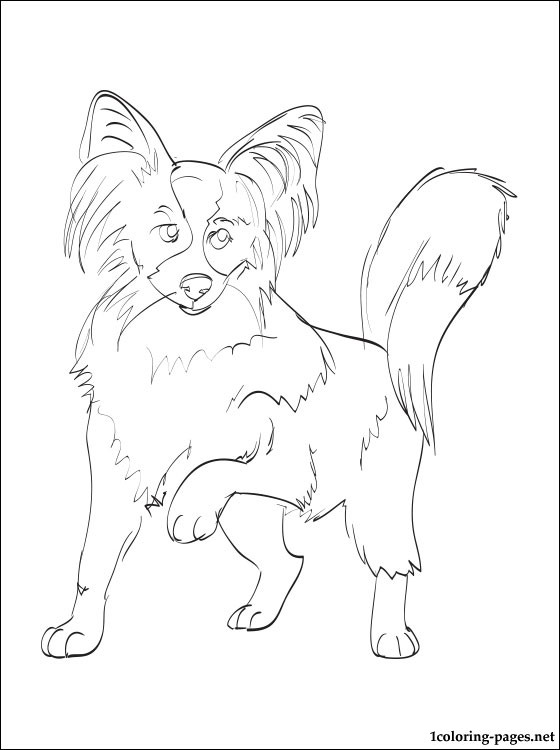 560x750 Papillon Coloring Page Coloring Pages